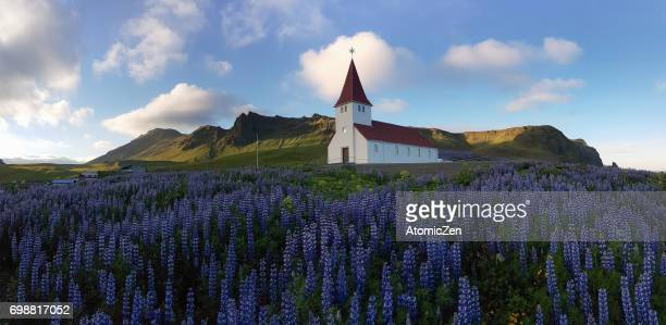 Vik's Church and Lupines, Iceland