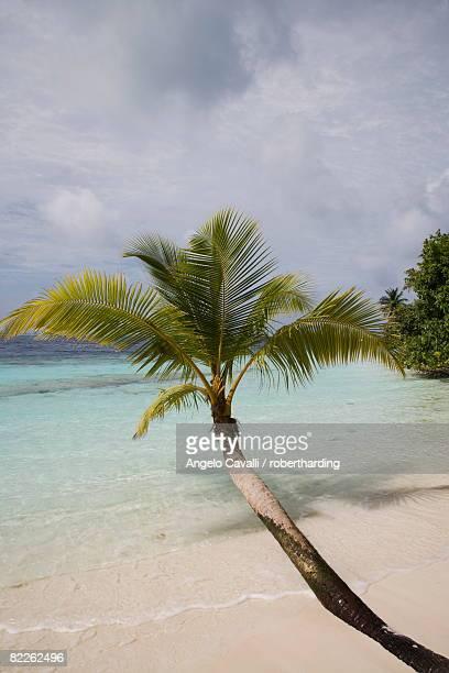 vilamendhoo island, ari atoll, maldives, indian ocean, asia - vilamendhoo stock photos and pictures