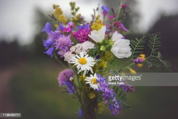 vildplockad blombukett med svenska sommarblommor - summer solstice stock pictures, royalty-free photos & images