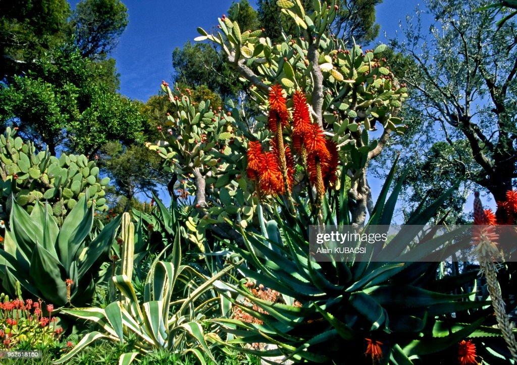 Jardins de la Cote d'Azur : News Photo