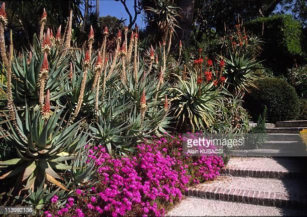 Villa Ephrussi de Rotschild's gardens in St Jean Cap Ferrat Alpes Maritimes France On March 05 2004Aloe arborescens Carpobrotus