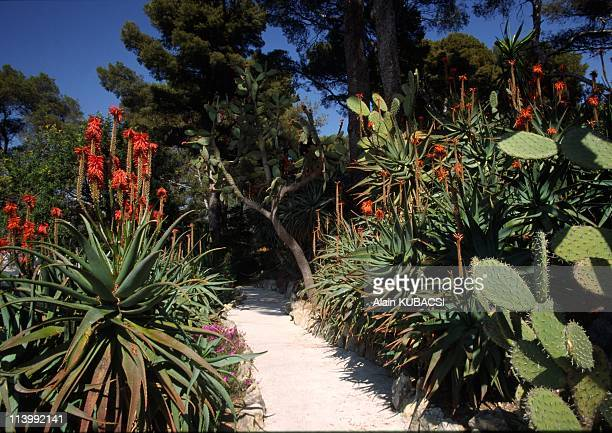 Villa Ephrussi de Rotschild's gardens in St Jean Cap Ferrat Alpes Maritimes France On March 05 2004Aloe arborescens Opuntia