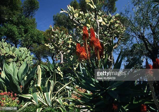 Villa Ephrussi de Rotschild's gardens in St Jean Cap Ferrat Alpes Maritimes France On March 05 2004Aloe arborescens Agave americana Agave mexicana...