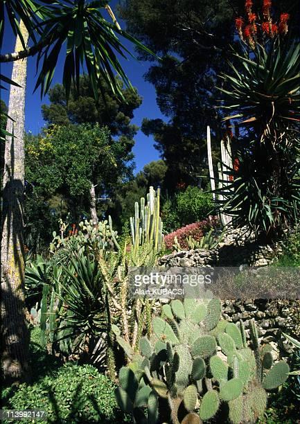 Villa Ephrussi de Rotschild's gardens in St Jean Cap Ferrat Alpes Maritimes France On March 05 2004Aloe arborescens Opuntia Yucca