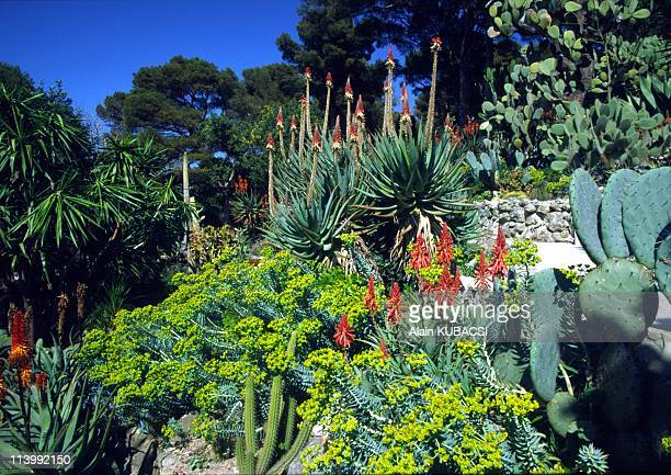 Villa Ephrussi de Rotschild's gardens in St Jean Cap Ferrat Alpes Maritimes France On March 05 2004Euphorbia rigida Aloe arborescens Opuntia Yucca