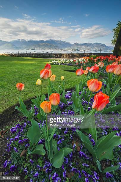 Villa Pallavicino, Stresa, Lake Maggiore, Verbano-Cusio-Ossola province, Piedmont, Italy. Tulips in bloom in garden on the lake front.