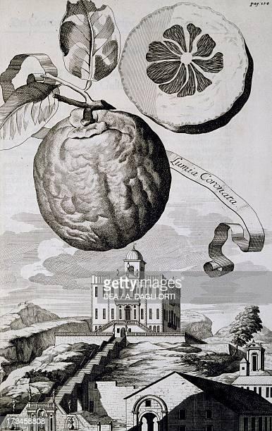 Villa SartoriSalvatico in Battaglia Terme engraving by Johann Christoph Volkamer from Continuation der Nuernbergischen Hesperidum 1714 18th century...