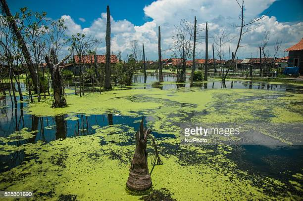 A village affected disaster water rob in Village Mulyorejo Pekalongan Central Java on March 7 2016 Rob or seawater flooding is a natural phenomenon...
