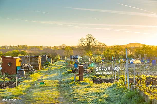 Village allotments early in the morning.