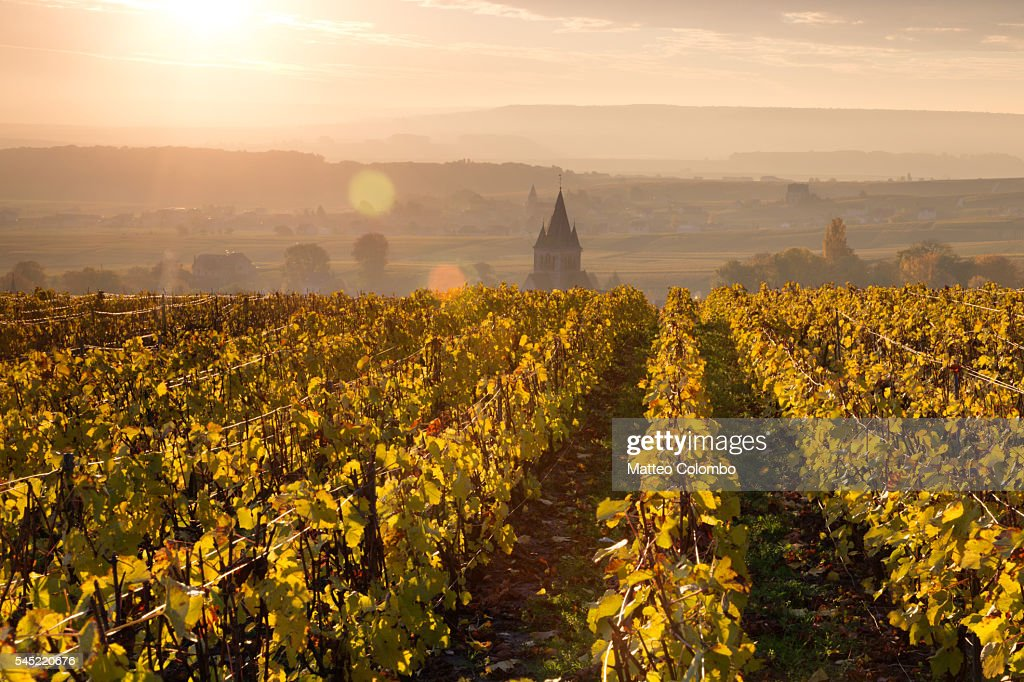 Village and vineyards in autumn, Champagne, France : Stock Photo