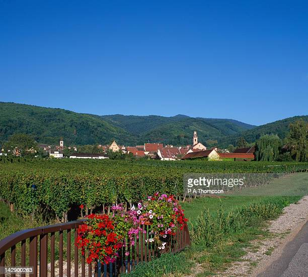 village and vineyards, riquewihr, alsace, france - haut rhin stock pictures, royalty-free photos & images