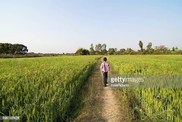 Village boy walking between rice fields