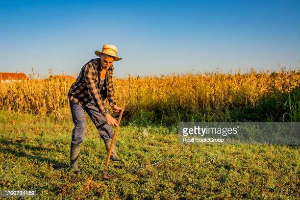 village country man on summer meadow mowing grass with classic scythe - serbia stock pictures, royalty-free photos & images