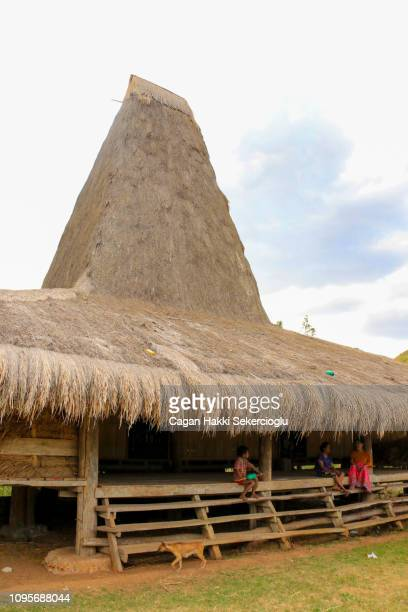 "a village family in a sumbanese uma mbatangu or traditional peaked house. the upper peak is where the ""marapu"" or the spirits reside. the indigenous religion is focused on the marapu. - {{asset.href}} imagens e fotografias de stock"