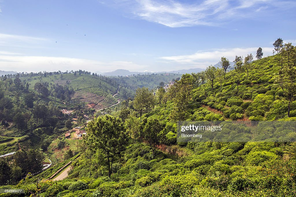 Village houses stand surrounded by tea estates in Coonoor, Tamil Nadu, India, on Saturday, Nov. 30, 2013. India is the worlds largest producer of tea after China. Photographer: Prashanth Vishwanathan/Bloomberg via Getty Images