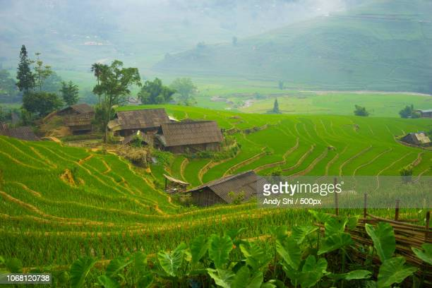 village huts with terraced fields, sa pa, lao cai, vietnam - sa pa stock photos and pictures