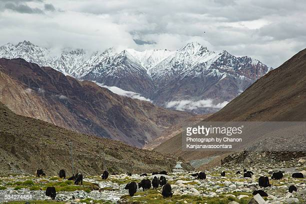 village near pangong lake - nautre stock pictures, royalty-free photos & images