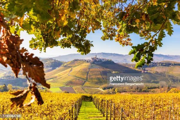 village of castiglione falletto between autumn colors. - italia ストックフォトと画像