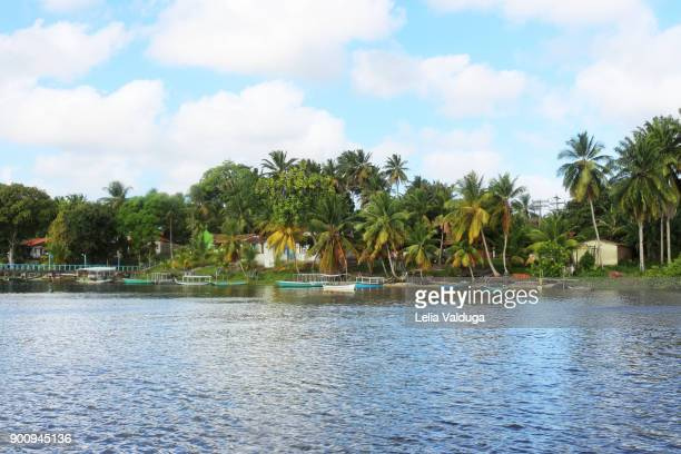 village of fishermen the rio do inferno (river of hell), between boipeba and tinharé - ba- brazil - cacao tree stock photos and pictures