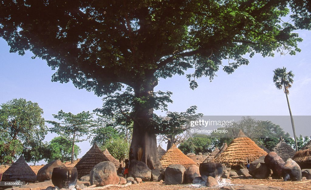 Village of Iwol underneath a giant tree : Stock Photo