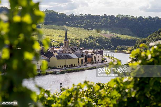 village of machtum amidst wineries - moselle stock pictures, royalty-free photos & images