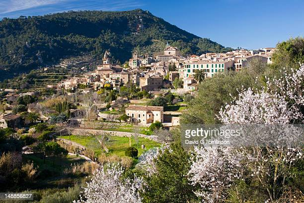 Village of Valldemossa,  with almond trees (Prunus dulcis) in bloom in foreground.