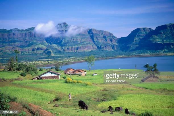 Village scene in Khurafat, Pune, Maharashtra, India.