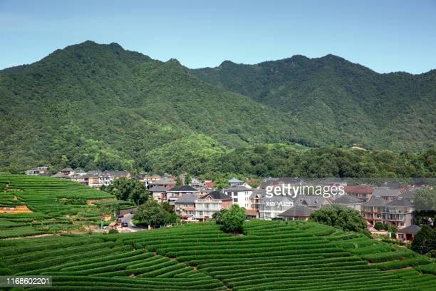 village surrounded by tea fields on hillside,hangzhou,china - terrassenfeld stock-fotos und bilder