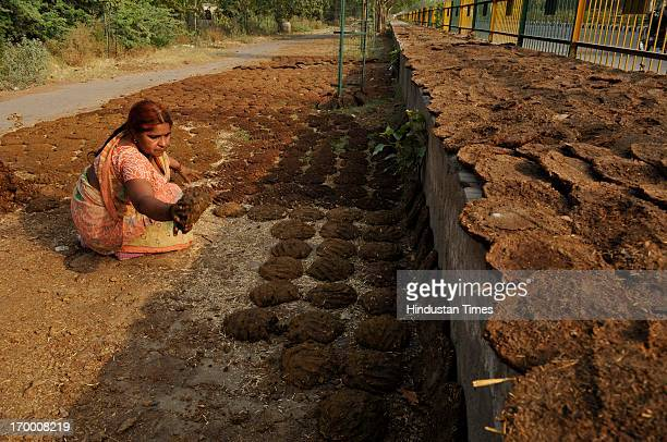 A village woman makes cow dung cakes and arranges them to be sun dried on a roadside near Sector 52 on the ocassion of World Environment Day on June...