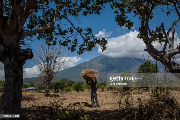 KARANGASEM BALI INDONESIA SEPTEMBER 29 A villager carries fire wood as mount Agung is in the backround on September 29 2017 in Karangasem regency...