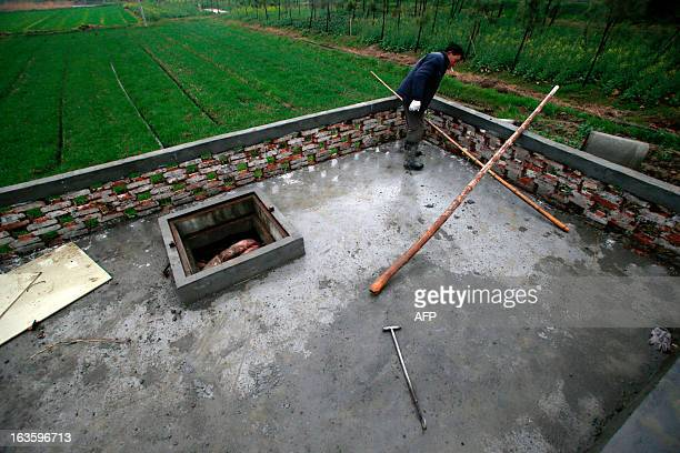 A villager dumps dead pigs into a decontamination storage built on a farmland in a town in Jiaxing municipality east China's Zhejiang province on...