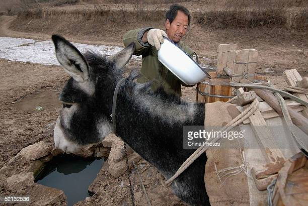 A villager fetches water with his donkey from a spring which is 2 kilometers from his home on February 4 2005 in Heshui County of Gansu Province...