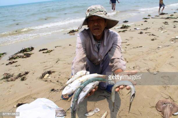 A villager shows dead sea fish he collected on a beach in Phu Loc district in the central province of Thua Thien Hue on April 21 2016 Vietnam on...