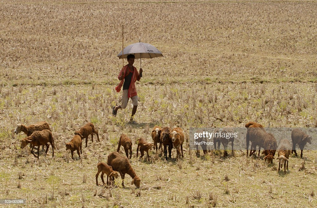 Heat Wave in Eastern India : ニュース写真