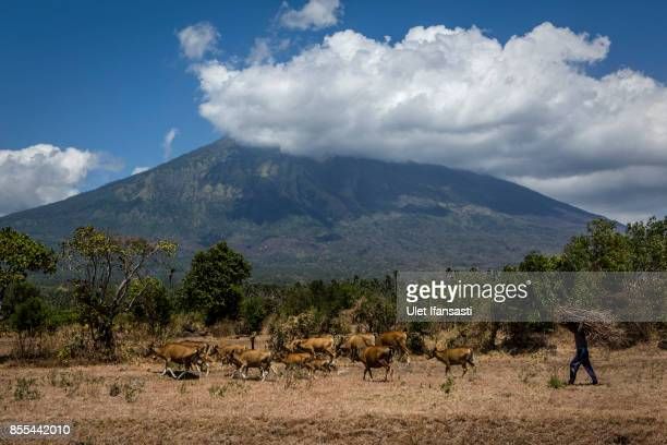KARANGASEM BALI INDONESIA SEPTEMBER 29 A villager walks as carries fire wood as mount Agung is in the backround on September 29 2017 in Karangasem...