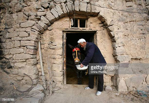 A villager who offers donkey rides known as the 'donkey man' feeds a donkey water in a cavehouse near the Hukou Waterfall on February 25 2007 in...