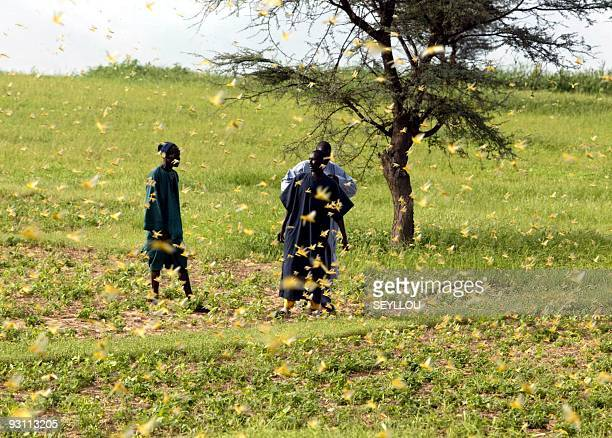 Villagers chat in a field invaded by locusts 26 August 2004 near Dara Senegal would need $100 million USD this year to battle the invasion which has...