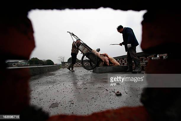Villagers dumps dead pigs into a decontamination storage built on a farmland in a town in Jiaxing municipality east China's Zhejiang province on...