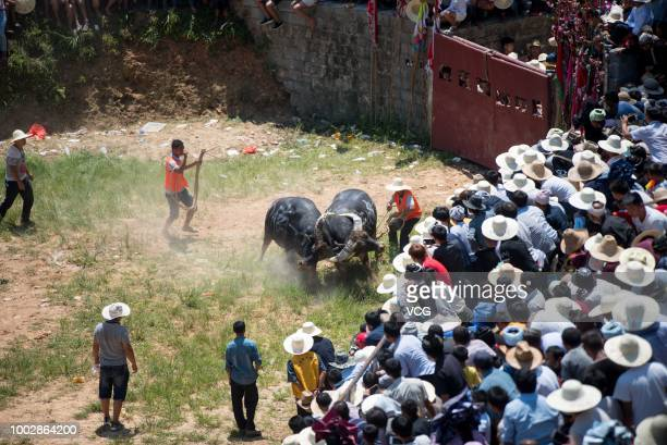 Villagers gather together to watch bullfighting on the sixth day of the sixth lunar month at Congjiang County on July 18 2018 in Qiandongnan Miao and...