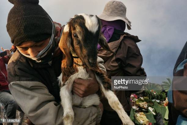 Villagers hold a goat as the offerings by Tenggerese during the Yadnya Kasada Festival at crater of Mount Bromo in Probolinggo East Java Indonesia on...
