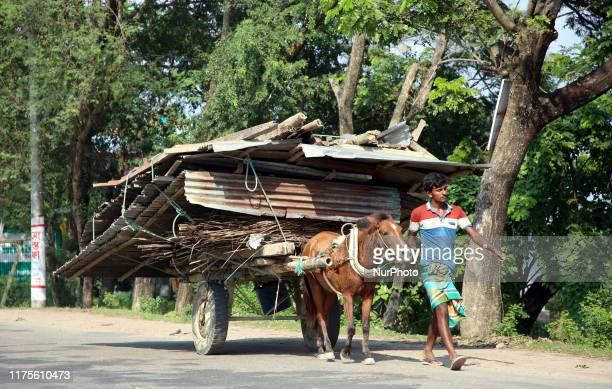 Villagers hurriedly relocate their homesteads fearing erosion after losing houses in erosion of the River Padma at Goalanda in Rajshahi Bangladesh on...