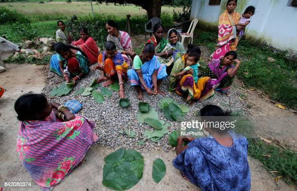 Villagers of a tribal community collecting Siali leafs and stitch it before to supply to the market at an under developed district of eastern Indian...