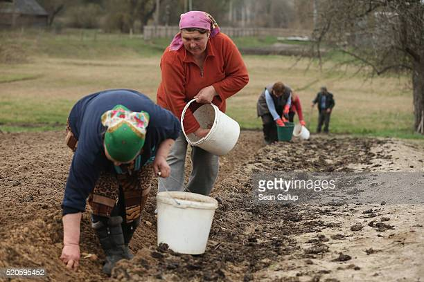 Villagers plant potatoes on April 9 2016 in Khocheva Ukraine The small village of Kohocheva lies in northern Ivankiv region only 50km south of the...