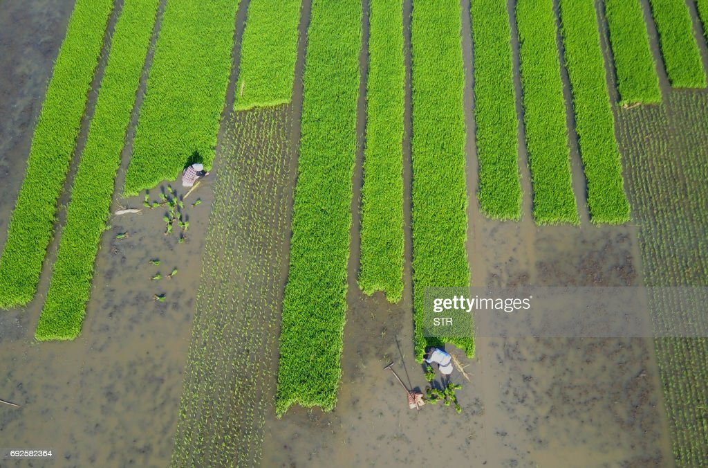 TOPSHOT - Villagers plant rice in a field in Lianyungang, in China's eastern Jiangsu province on June 4, 2017. /