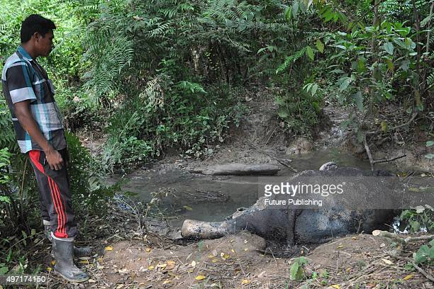 Villagers take a look at the dead body of a Sumatran elephant at Seumanah Jaya plantation area on November 14, 2015 in Aceh, Indonesia. An official...