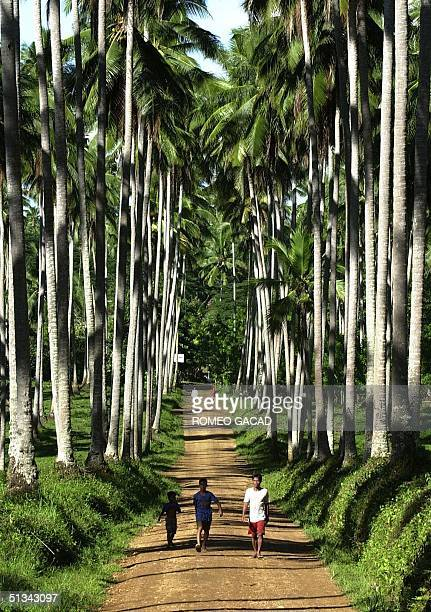 Villagers walk along a path on a coconut plantation in the town of Lantawan on Basilan island 13 June 2001 The island's suitable land produces...