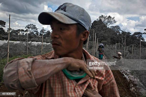 Villagers work in their field which has been covered by ash from eruption of mount Sinabung in Sigarang Garang village on November 25 2013 in Karo...