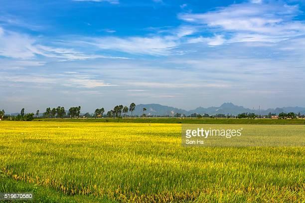 villages in vietnam - ナムディン ストックフォトと画像
