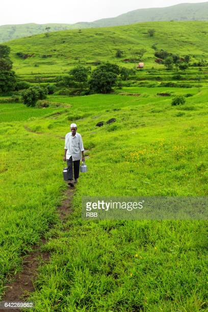 villeger walking in the field - milkman stock photos and pictures