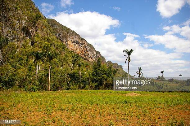 vinales area - timothee stock pictures, royalty-free photos & images